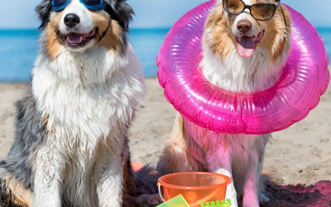 chiens en vacances