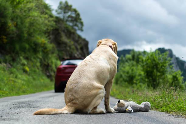 Stop à l'abandon des animaux