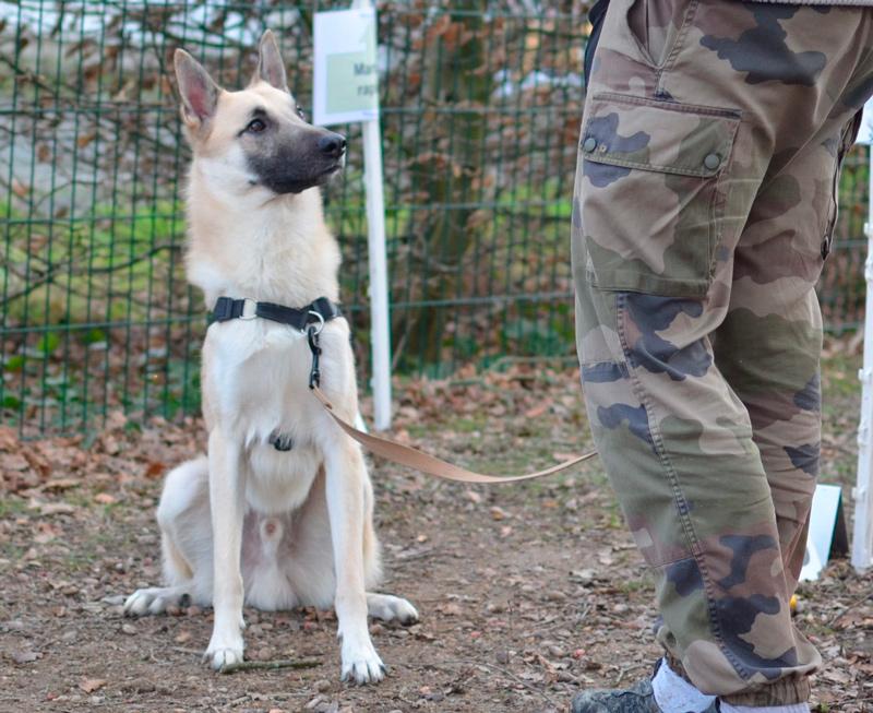 Education canine - Angers - Beaucouzé